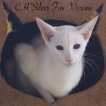 CH*Silver Fox ' Viviane